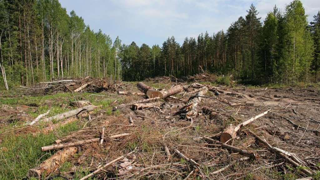 Незаконна вирубка лісу задля нового цвинтарю