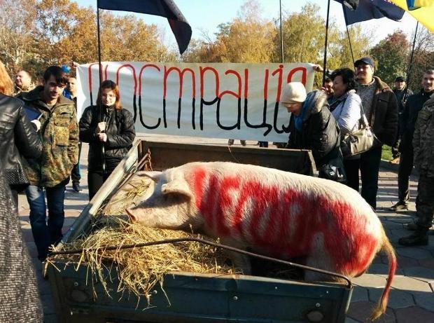В Одесі заради люстрації до ОДА привели свиню (Фото)