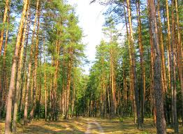 """Дружині депутата-свободівця дали 47 """"соток"""" лісу в користування на 49 років"""