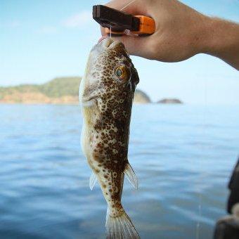 В Крыму из моря выловили загадочных ядовитых рыб