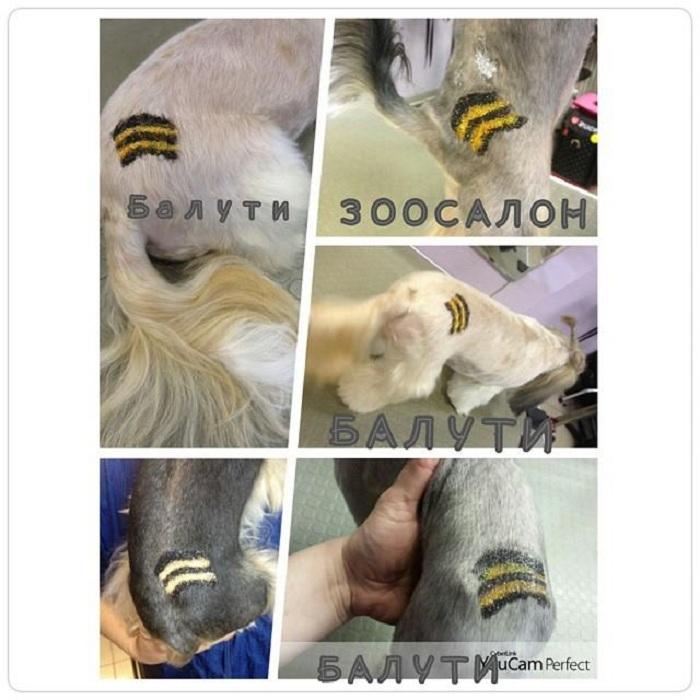 Московский зоосалон делает собакам бесплатные тату цветов георгиевской ленты