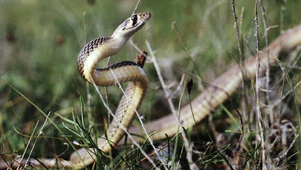 За сутки на Львовщине от укуса змеи пострадали две женщины