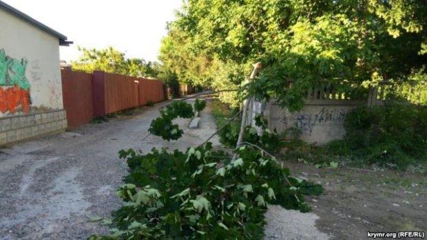 Ураган в Крыму: упавшие деревья, остановлено движение на перепр