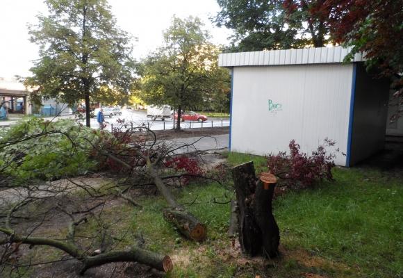 На вул. Петлюри незаконно зрізали дерева (фото)