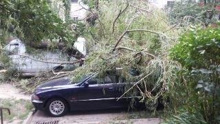 У Львові на Симоненка впала стара верба: пошкоджено два авто (ФОТО)