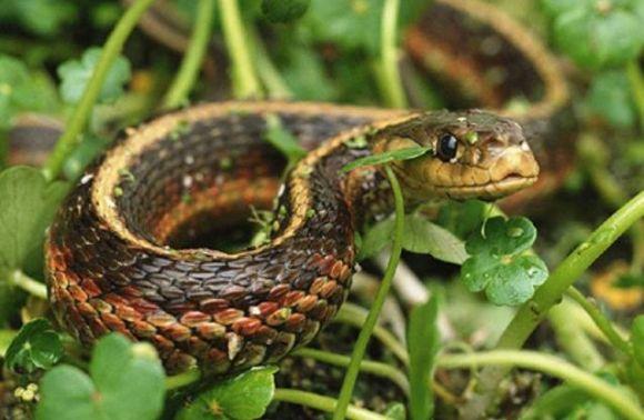 На Львовщине змея отправила в реанимацию 43-летнего мужчину