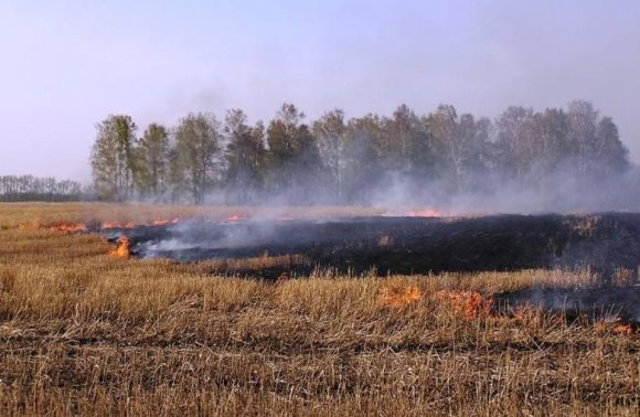 На Львовщине из-за сжигания стерни погибла женщина и еще двое обгорели