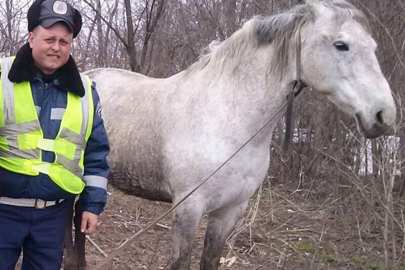 Львовские милиционеры поймали неудачника-конокрада