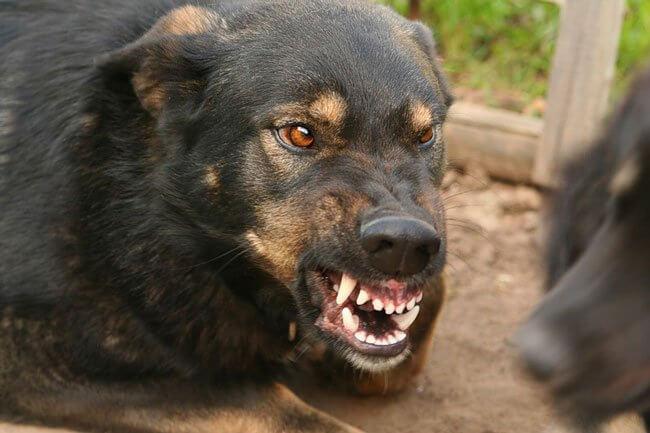 Львів'яни страждають від укусів собак