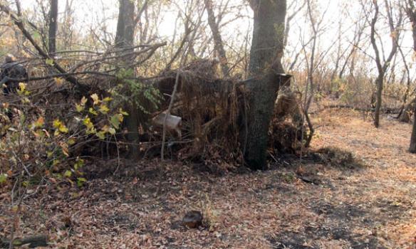 У Донецькій обл. правоохоронці знешкодили схованку з гранатами (Фото)