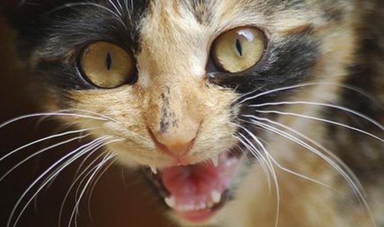 У селі на Буковині скажений кіт покусав сім`ю, в якій жив