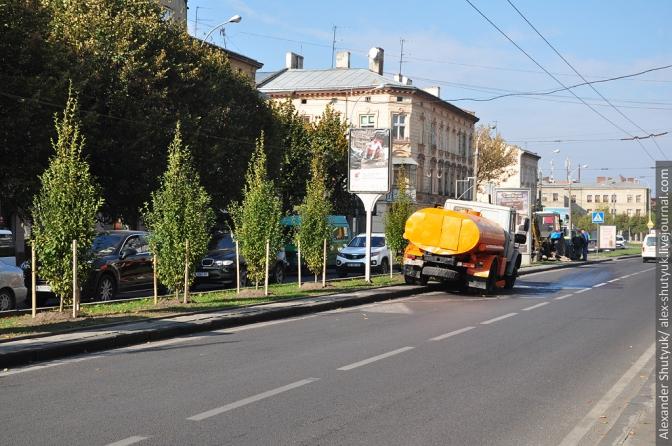 У Львові озеленили проспект Чорновола (Фото)
