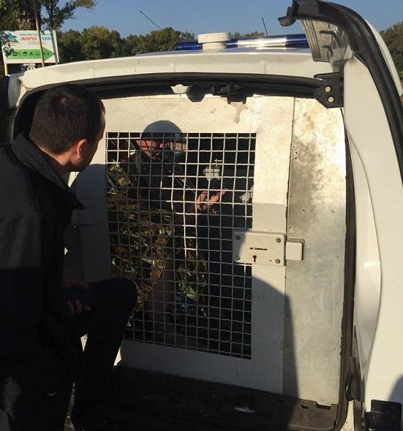 У Львові затримали громадянина Швеції, якого розшукує Інтерпол за замах на вбивство