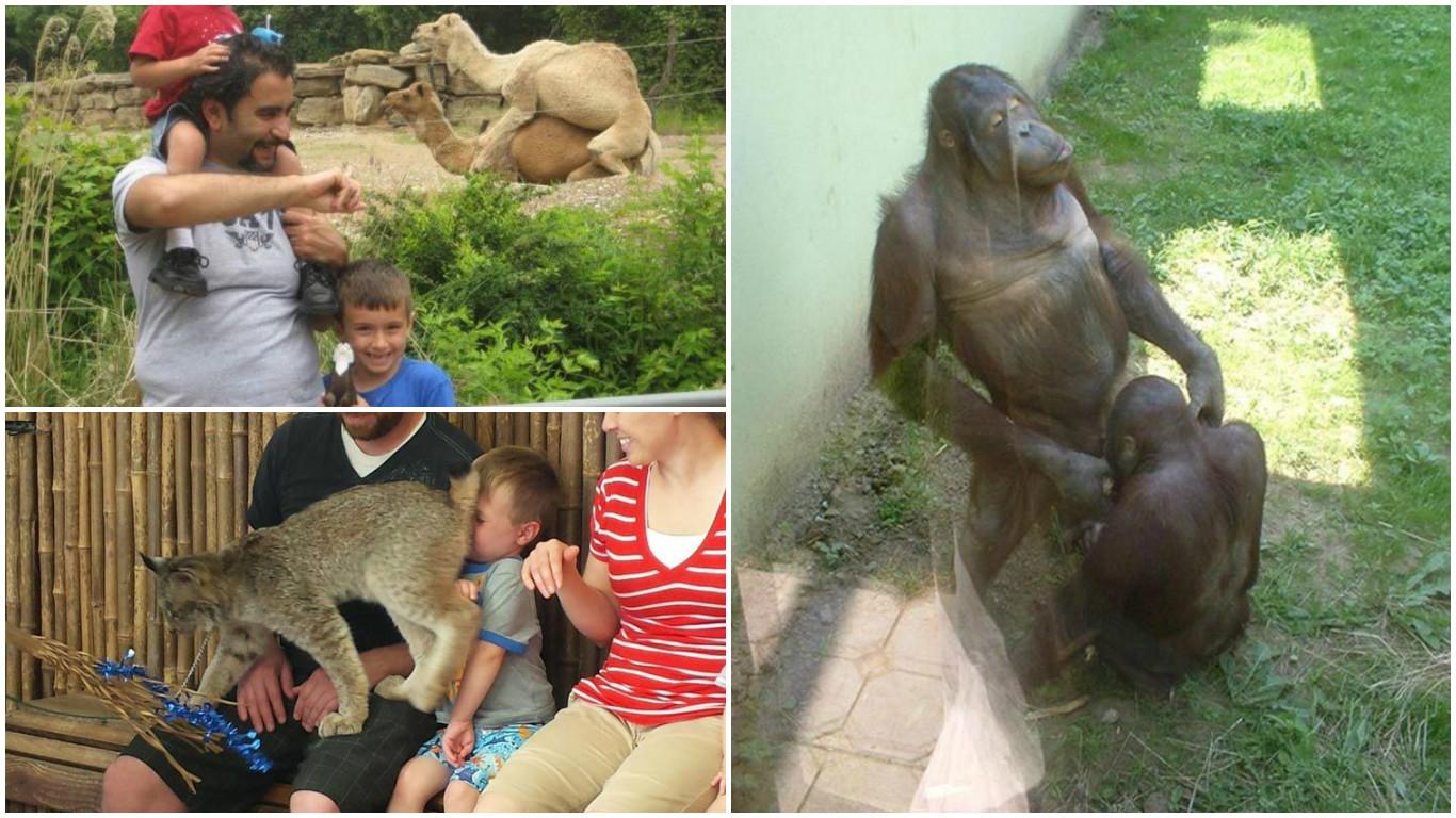 20 смішних випадків, коли похід в зоопарк не виправдав очікування (ФОТО)