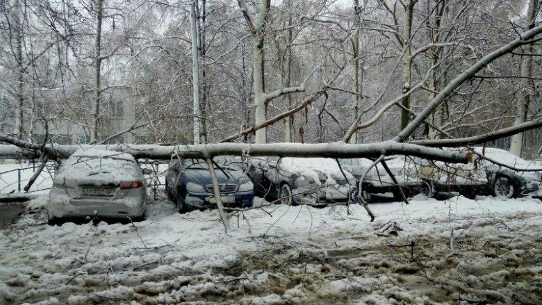 Потужна снігова буря накрила Харків (ФОТО)