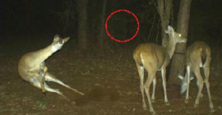 Вот что удалось запечатлеть фотоловушками в лесу ночью. Этим кадрам до сих пор нет объяснения…