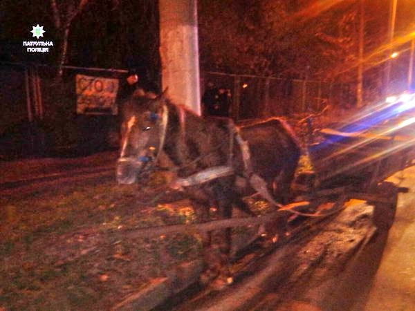 Кінь привіз п'яного господаря до Львова, подолавши відстань у 30 км (ФОТО)