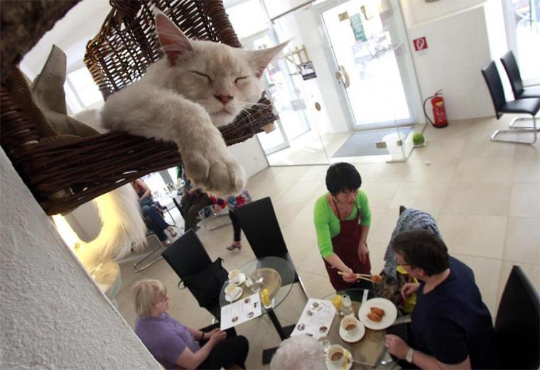 Люди з котами не прижилися: перше у Львові зоокафе закривають