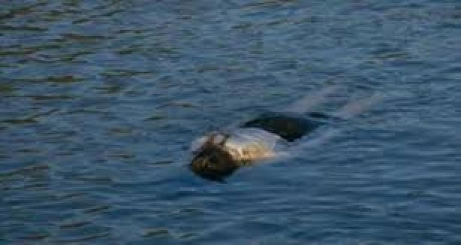 На Львівщині у каналі виявили тіло мертвого чоловіка