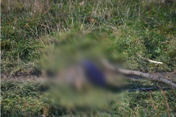 Обезголовлене тіло підлітка знайшли на Закарпатті (ВІДЕО)