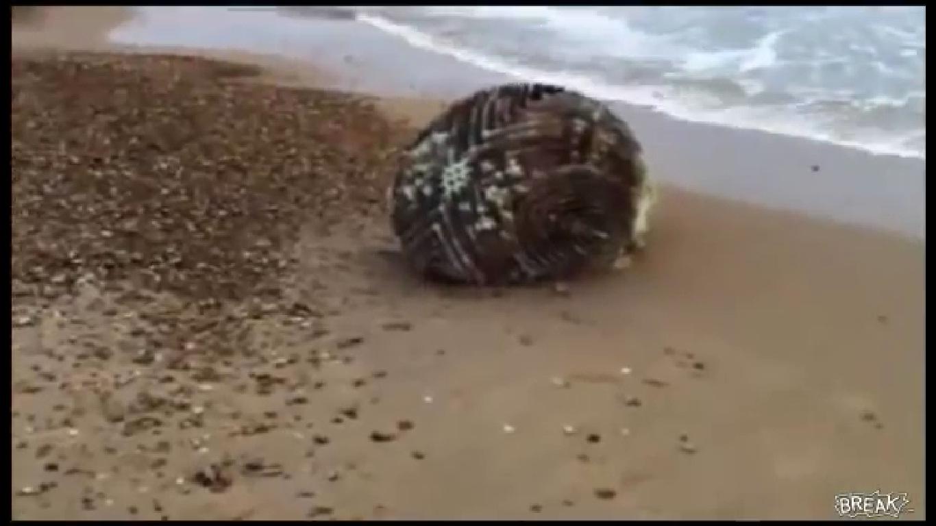 Цунамі винесло на берег Японії небачений об'єкт (ВІДЕО)