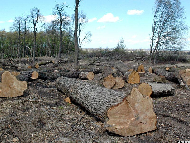 На Львівщині продовжують масово незаконно вирубувати дерева