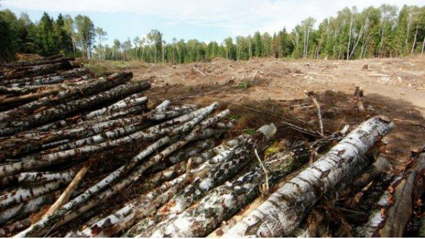 На Львівщині знищили ліс на 1,5 мільйона гривень