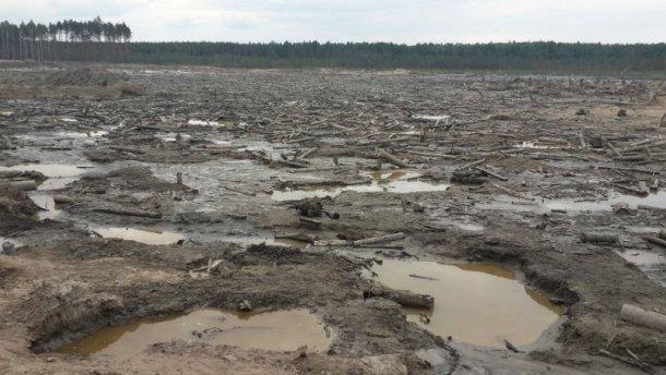 Поблизу бурштинової плантації сталася перестрілка: є поранені