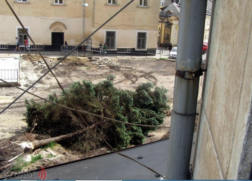 Во время реконструкции площади Мытной во Львове срезали большинство деревьев (ФОТО, ВИДЕО)