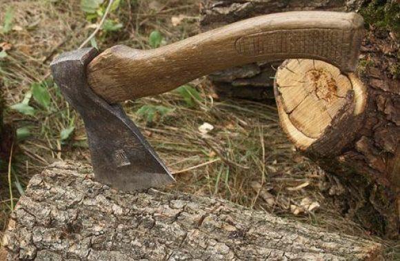 У Буському лісгоспі незаконно вирубали ліс на два мільйони