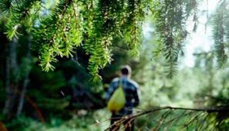 На Львівщині п'ятий день шукають працівника туристичної бази, котрий зник у лісі