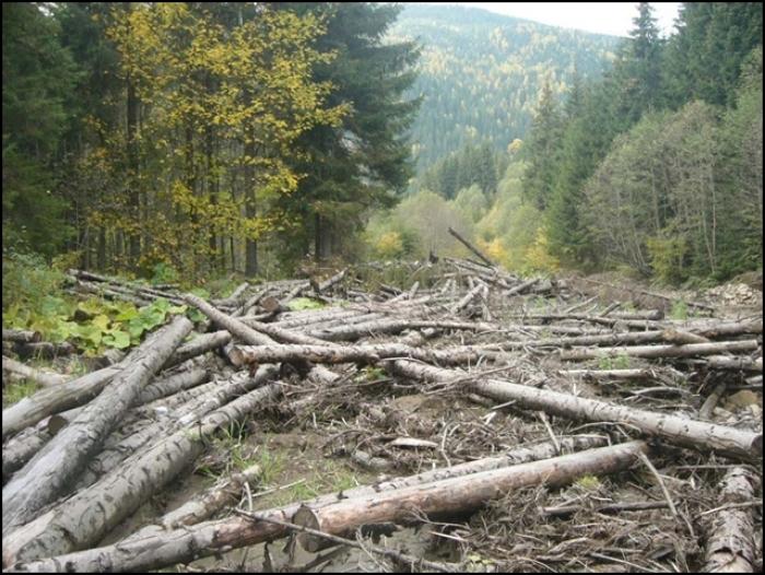 Як лісники та прикордонники прикривають вирубку лісу на кордоні з Україною