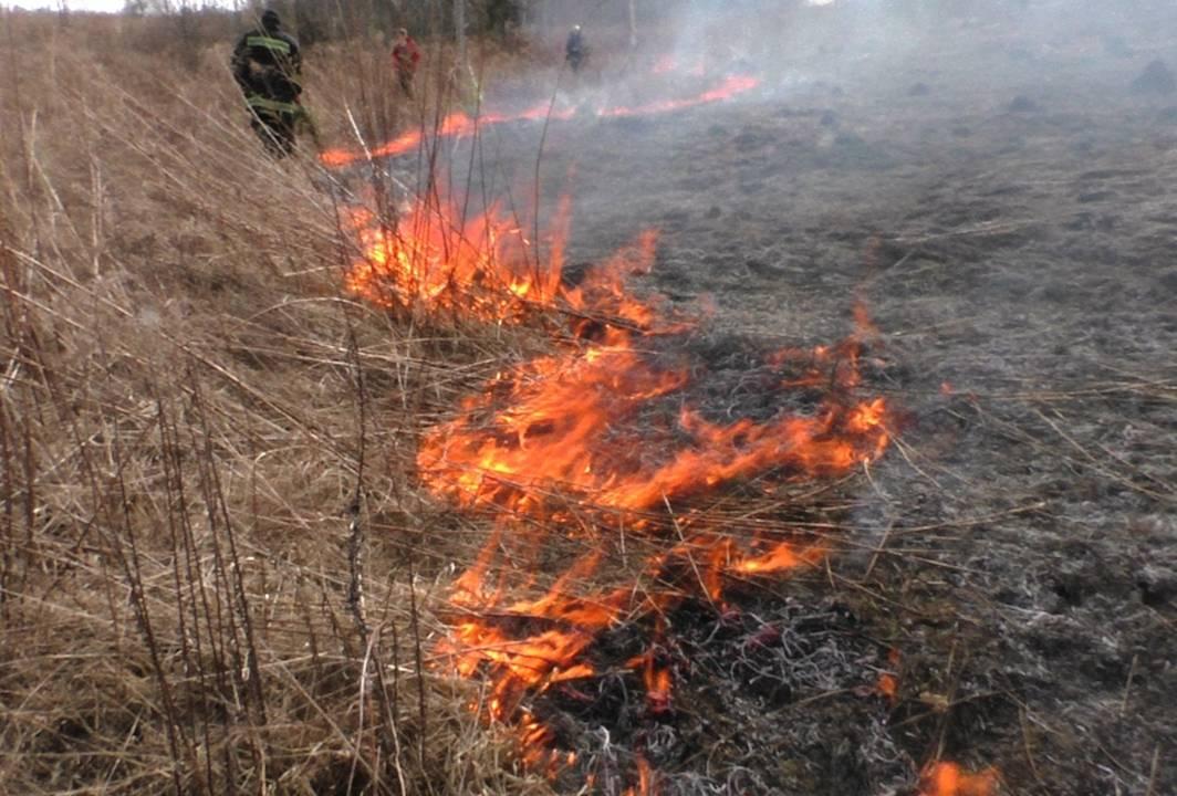 На Львівщині горять торфовища