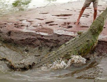 В Австралії у школу підкинули крокодилів