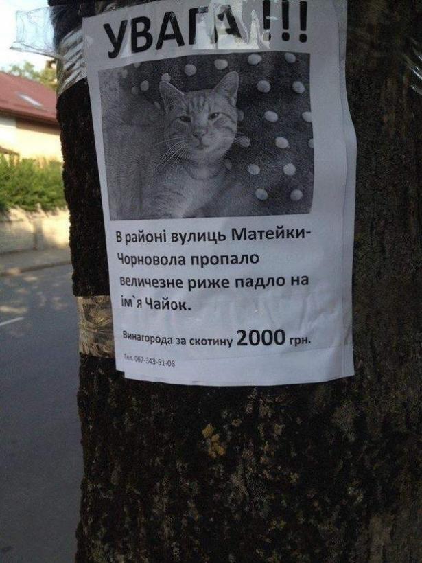 Як в Україні шукають рудого кота (ФОТО)
