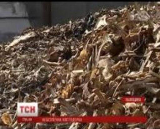 Ситуація на кісткодробильному заводі Львівщини шокувала всю країну