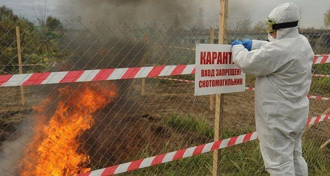 Термінові новини: На Харківщині ввели карантин через спалах африканської чуми