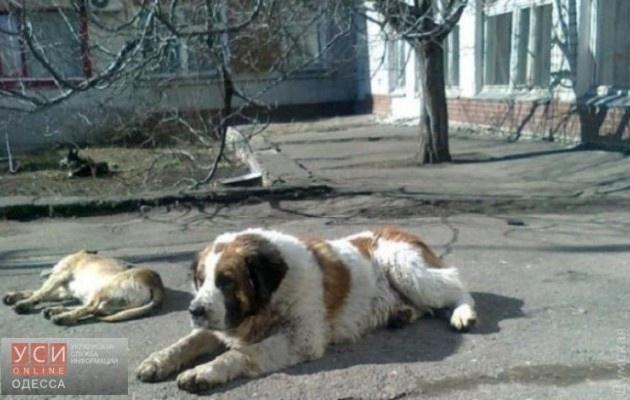 Зворушлива історія про одеського Хатіко: собака чекав на господаря 10 років