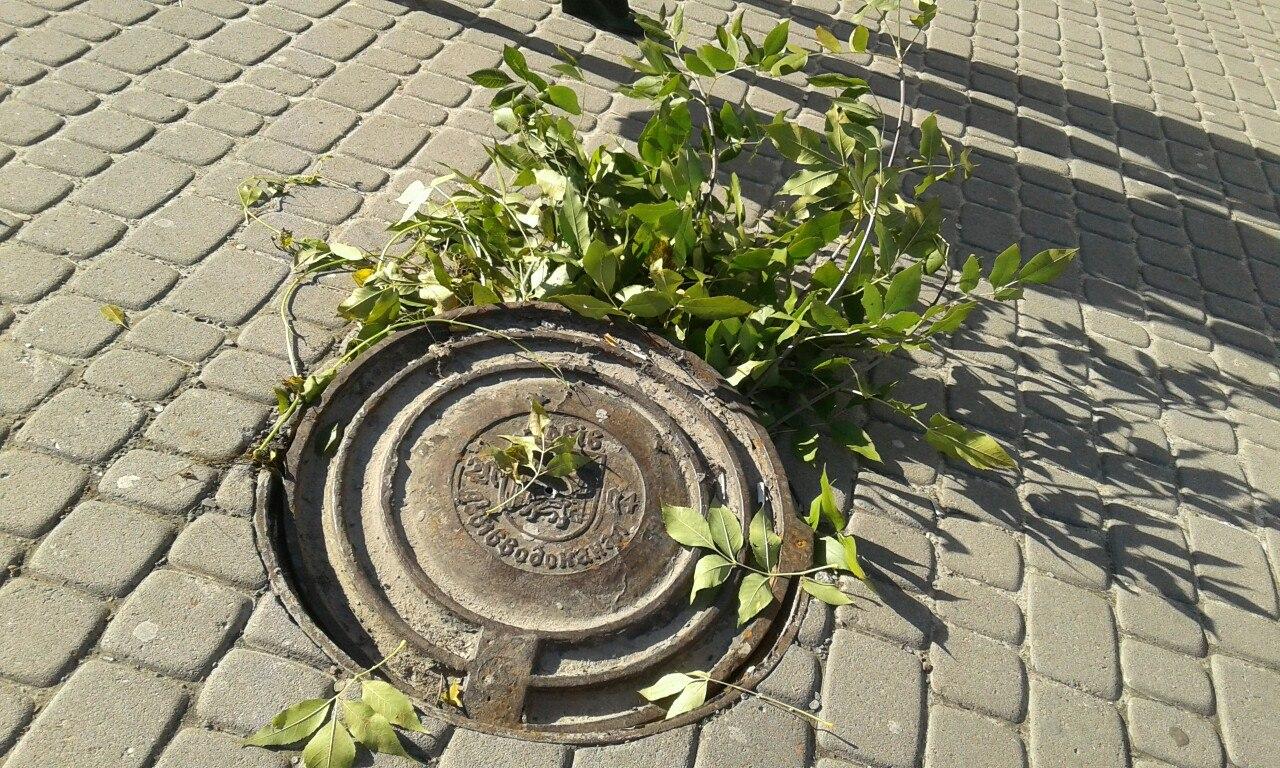 """Львівські рагулі: ось такий """"чудовий люк"""" знаходиться біля львівської школи"""