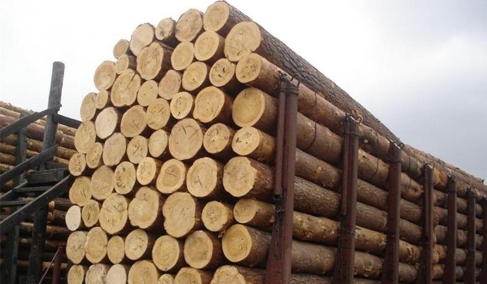 Раді запропонували скасувати мораторій на продаж лісу