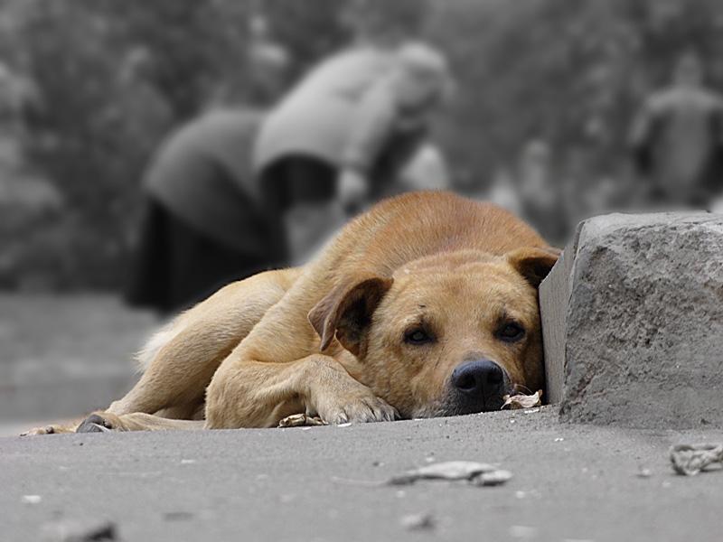 У Львові почали масово труїти собак