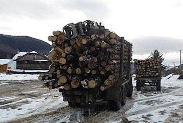 Хто стоїть за незаконними вирубками українських лісів