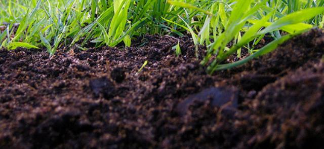 Екологи б'ють на сполох: родючі чорноземи Тернопільщини псують хімікатами