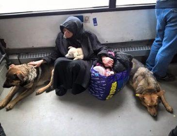 """""""Чистіші, ніж деякі люди"""": фото бродячих собак у маршрутці Львова розбурхало мережу"""