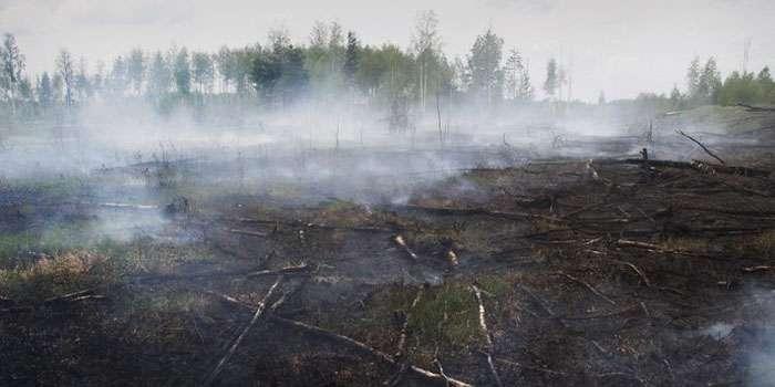 ТЕРМІНОВО!!! У Львові нереальними масштабами горить парк, вибухи чути на все місто (ФОТО)