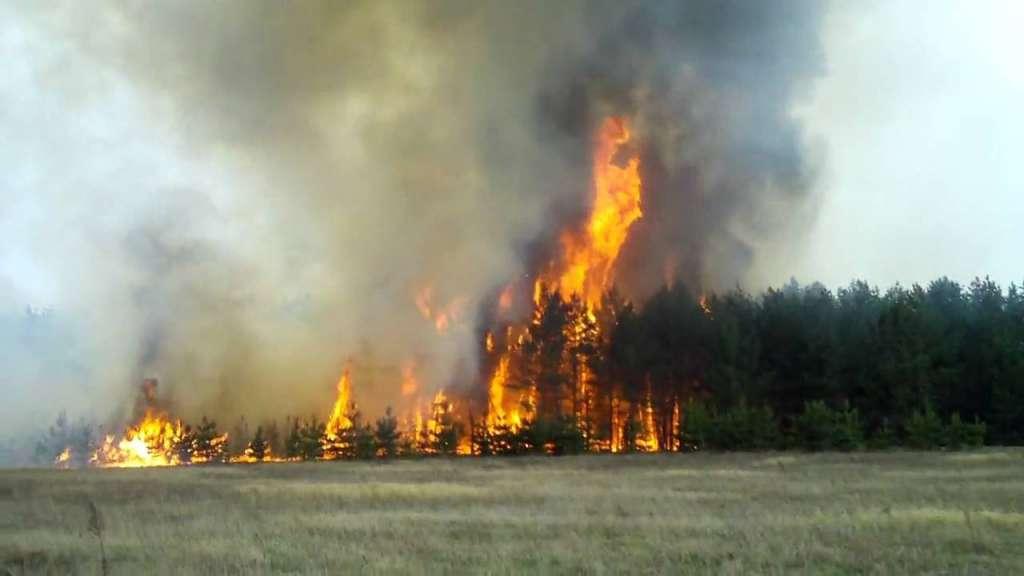 ТЕРМІНОВО!!! Під Львовом страшна пожежа, ліс горить з нереальною швидкістю