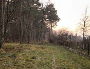 Прогулянка в лісі у Львові: Численні поранення внаслідок пострілу отримав 18-ти річний юнак