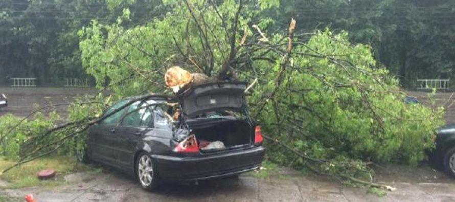 Шокуючі наслідки негоди у Львові: повалені дерева, обірвані дроти! Ви втратите дар мови! (ФОТО, ВІДЕО)