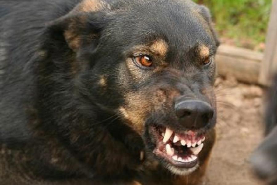 Нелюди!!! Чоловіки натравили на школярів скажених собак. Те, що там трапилося наводить жах на всю країну