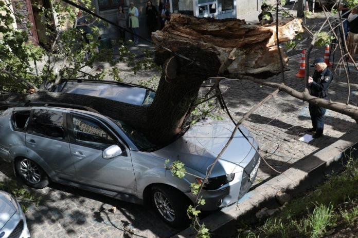"""""""Дерево пробило салон наскрізь і…"""": Авто відомої львівської депутатки перетворилось на купу металобрухту"""